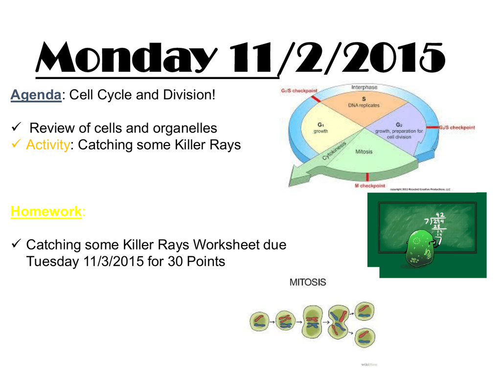 Week 4 Cell Cycle And Mitosis