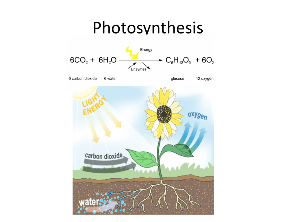 Photosynthesis Worksheet Power Point