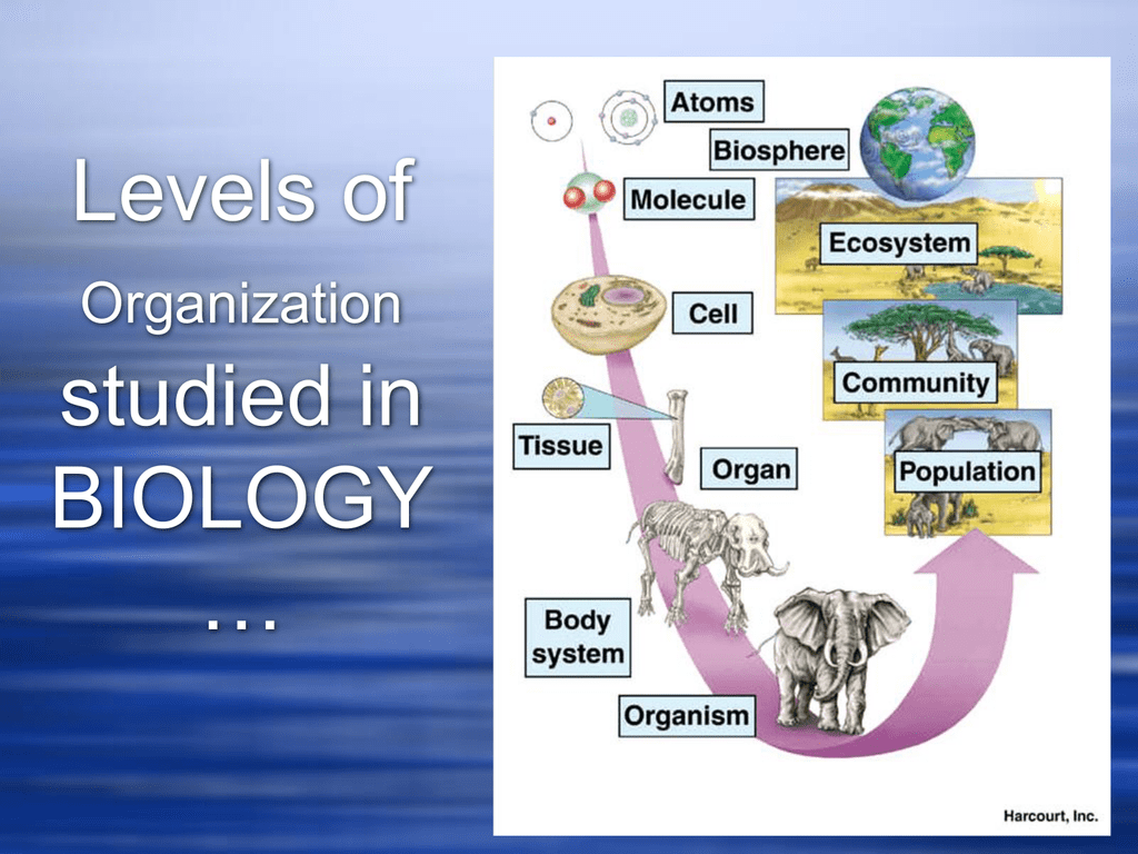 Characteristics Of Life And Biological Organization Ppt