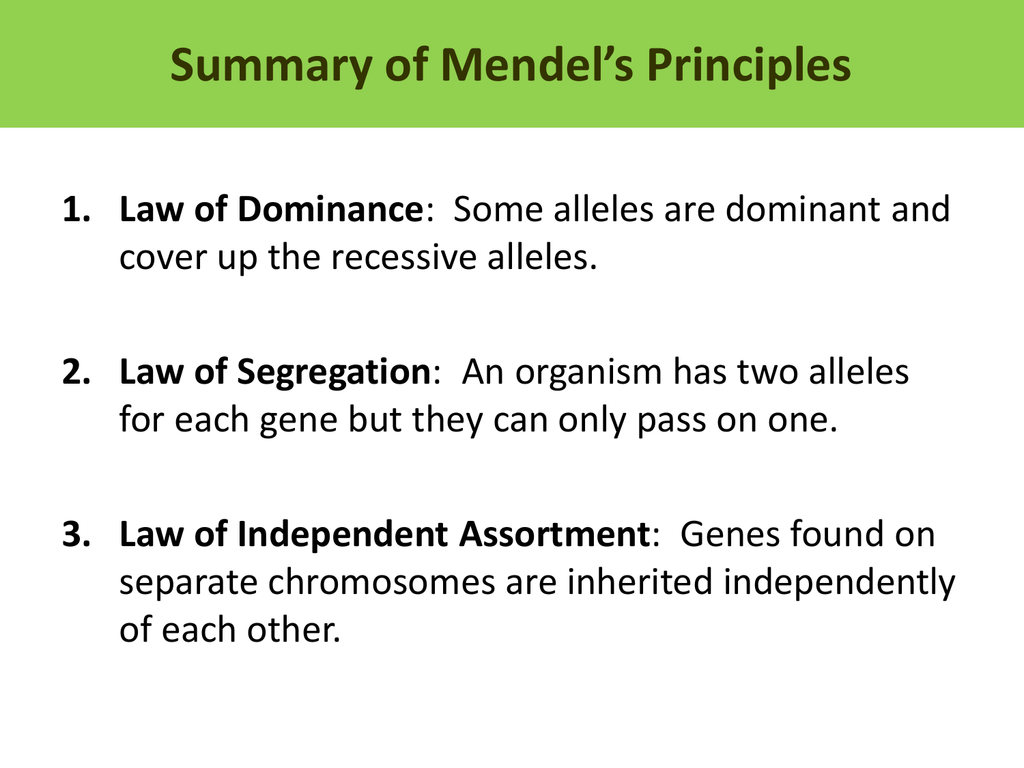 Summary Of Mendel S Principles