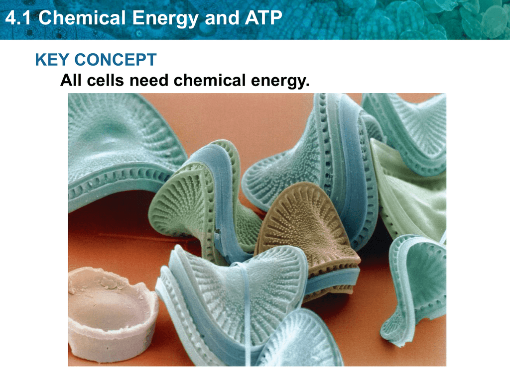 4 1 Chemical Energy And Atp Key Concept All Cells Need