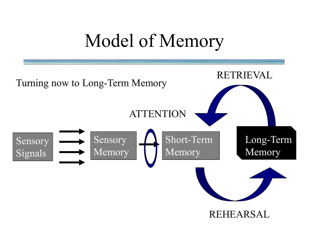 What Are The Main Characteristics Of Long Term Memory