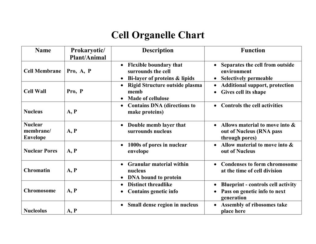 Cell Organelle Chart Name Prokaryotic Description