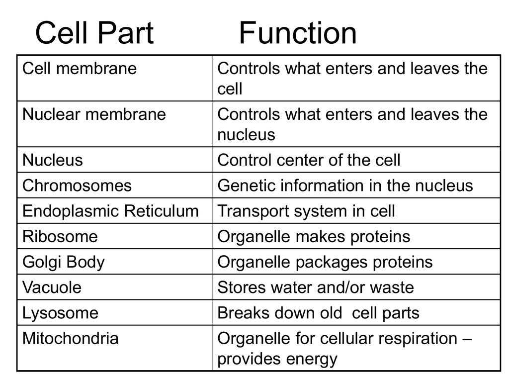 Cell Part Function