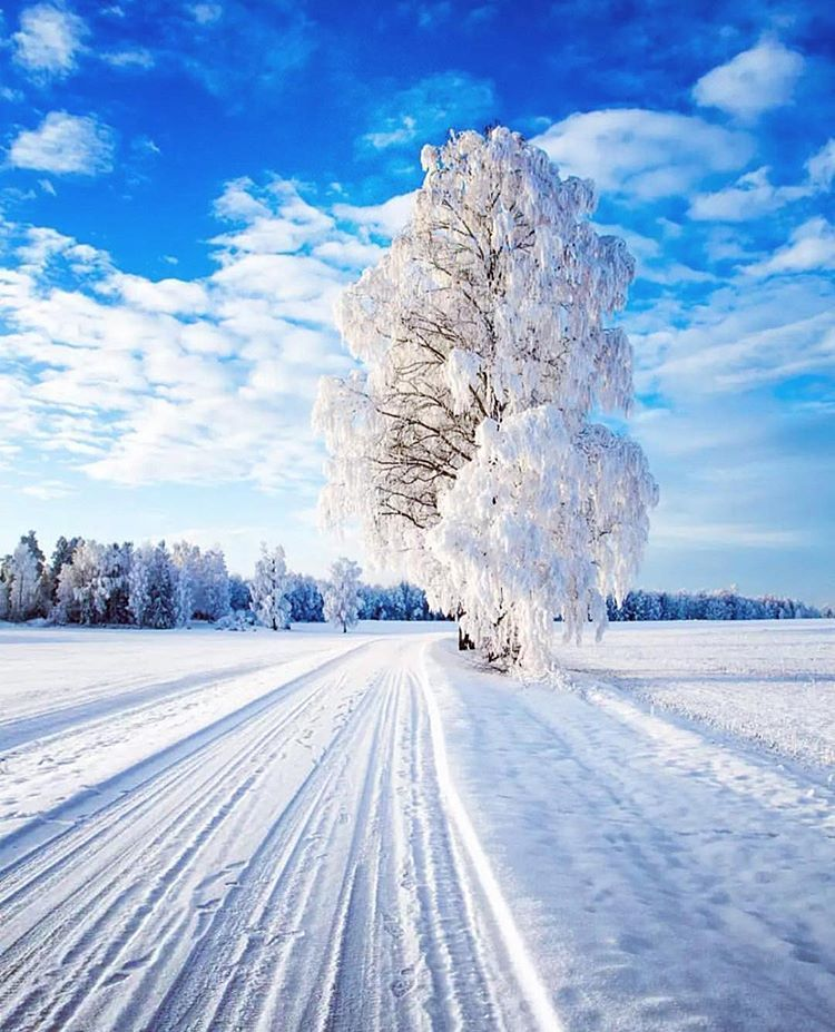 20 самых крутых фотографий, с помощью которых мы прощаемся с ушедшей зимой