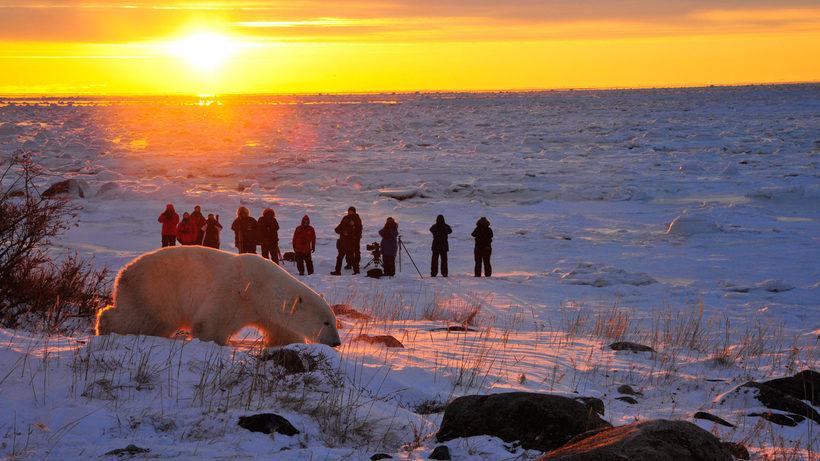 Черчилл: суровый канадский город, где существует тюрьма для белых медведей