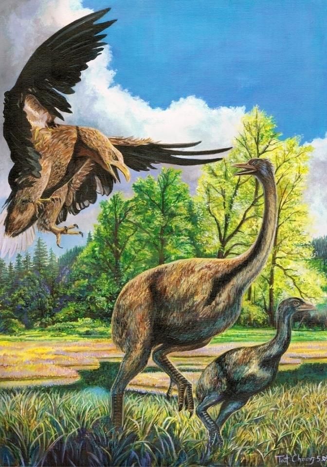 Самый большой, сильный и быстрый: почему вымер орел Хааста в Новой Зеландии