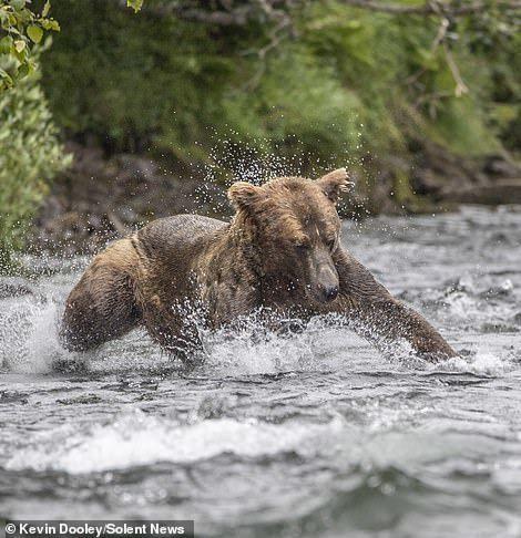 8 забавных фотографий о том, как рыбачит медведь