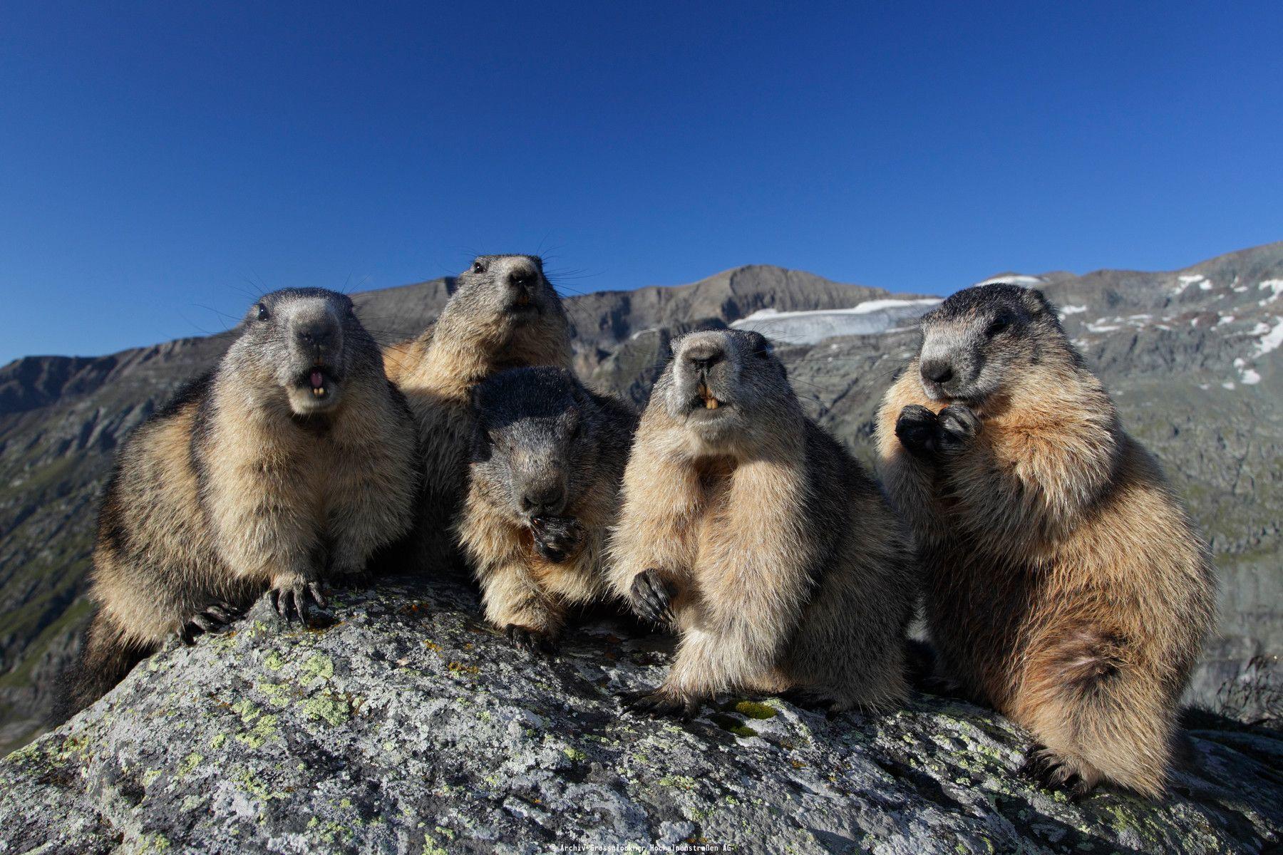 Гросглокнер - самая высокая гора в Австрии: описание и фото