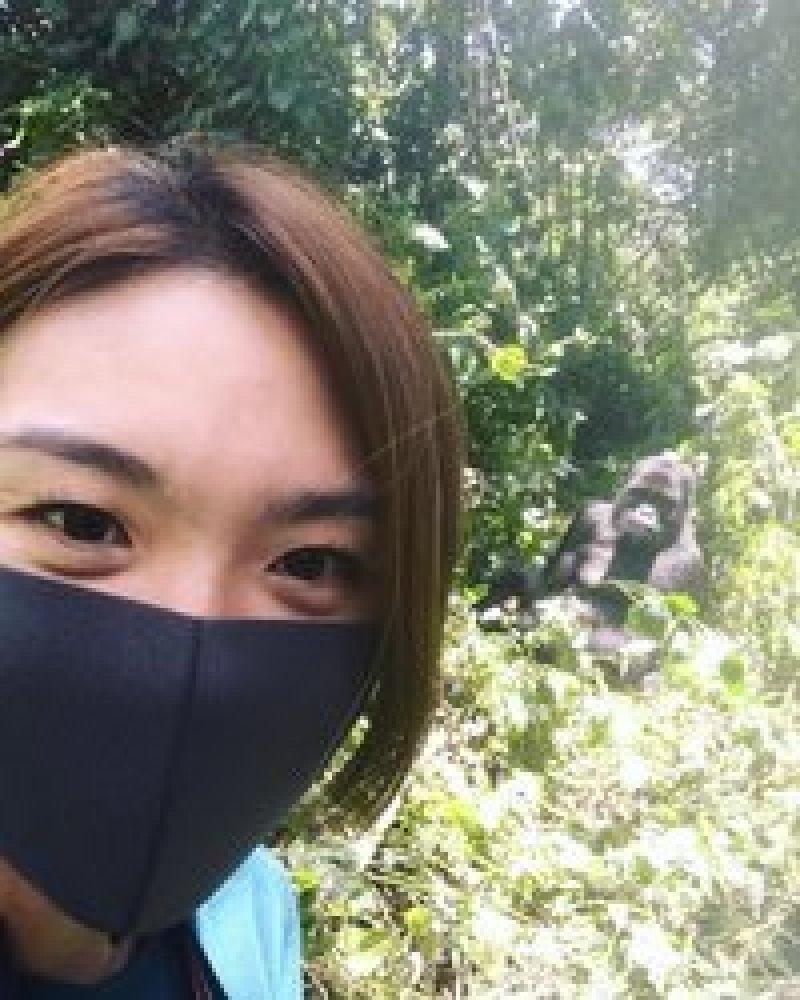 Почему фотографии с гориллами опасны для самих горилл