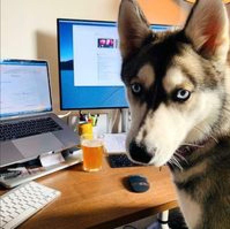 Фото собак, «работающих из дома», покоряют сеть