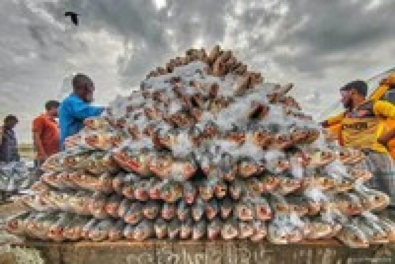 Победители конкурса фуд-фотографии показали, как жизнь людей в мире связана с едой
