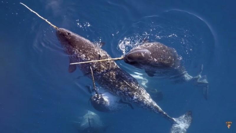 Видео: Самые большие органы и части тела животных