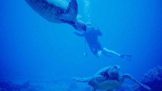 El planeta bajo el agua: Tierra adentro (2017)