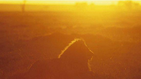 Reyes desaparecidos: Los leones del Namib (2017)