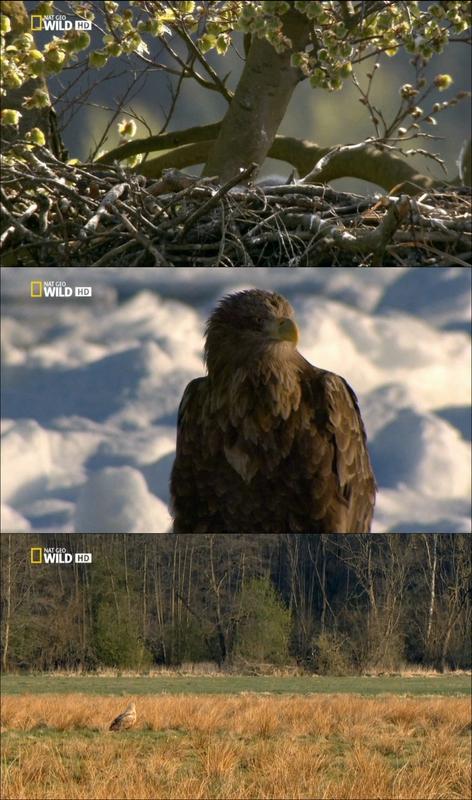 Águilas Reinas de los cielos 720p Por Mega