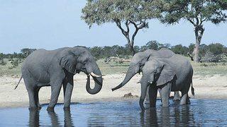 Grandes Parques Naturales de África: Chobe, tierra de aprendizaje (2017)