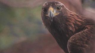 Albania salvaje: en el territorio del águila (2017)