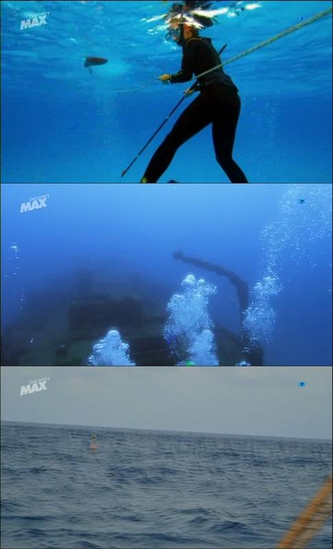 Tiburón Martillo, el depredador solitario [2014] [Discovery Max] [TDTRip] [Dual Es In]