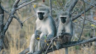 Grandes Parques Naturales de África: Parque Nacional de Karoo (2017)