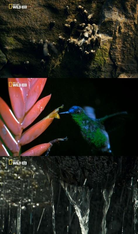 Wild Brasil [2014] [5/5] [NatGeo] [HDTV 720p]