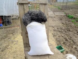 Demi's Fleece