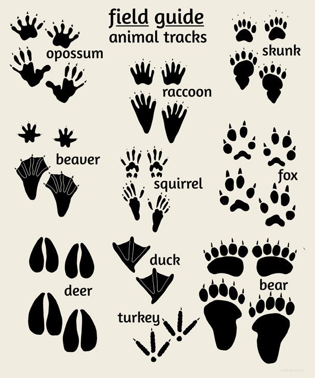 Woodland_nursery_art_animal_tracks_1024x1024