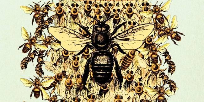 Endangered Bees Bee Species List Awareness