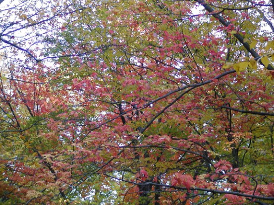 14-red-green-tree