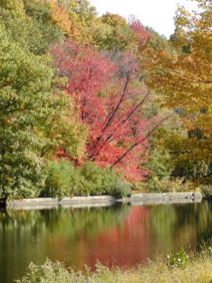 1-red-tree-river