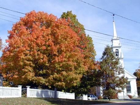8-church-trees