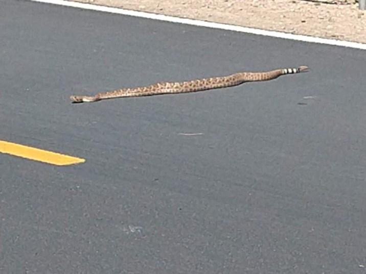 3.23 rattlesnake