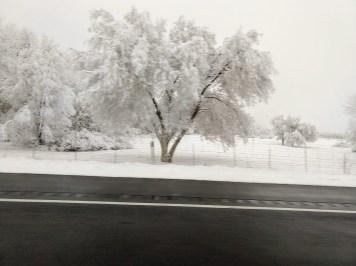 4.02 snow tree