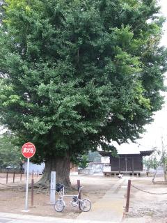 sashima4-9-1.jpg