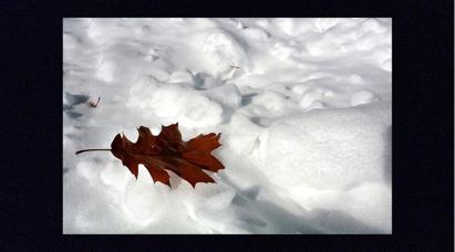 紛飛的大雪:冬季健康養生法則
