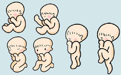 體諒妳的辛苦,懷孕期就讓老公來照顧所需的營養!(一)