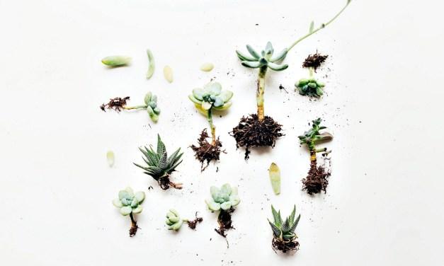 """「園藝治療師能夠將植物的力量""""化被動為主動"""",從綠茵中揉淬出人生的養分,滋養著每一個遇到的人。」"""