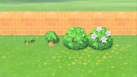 あつ 森 あじさい 咲か ない