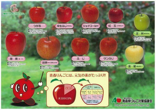 青森県りんご対策協議会が配布している、りんごに関する下敷き(表)