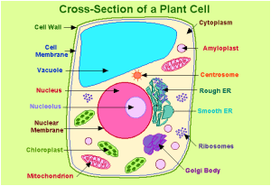 Important Biology Diagrams From All Chapters For CBSE Class 11