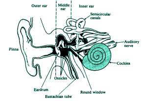 Important Science Diagrams From All Chapters For CBSE Class7