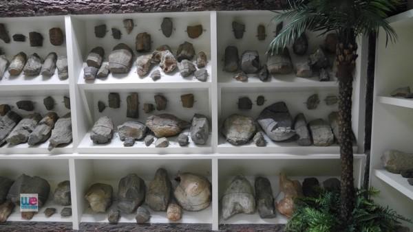 ส่วนหนึ่งของไม้กลายหินที่บริจาคโดยคุณอรุณ ตั้งพาณิชย์ ซึ่งชื่นชอบความสวยงามของไม้กลายเป็นหิน