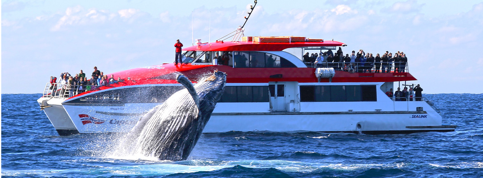 About Whales Your Sydney Whale Watching Guide Captain