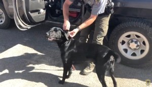 Idaho Fish and Game uses specially trained K9s to investigate natural crimes