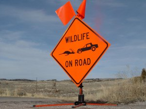Idaho Wild Collision Rescue Rule: What Can You Save?