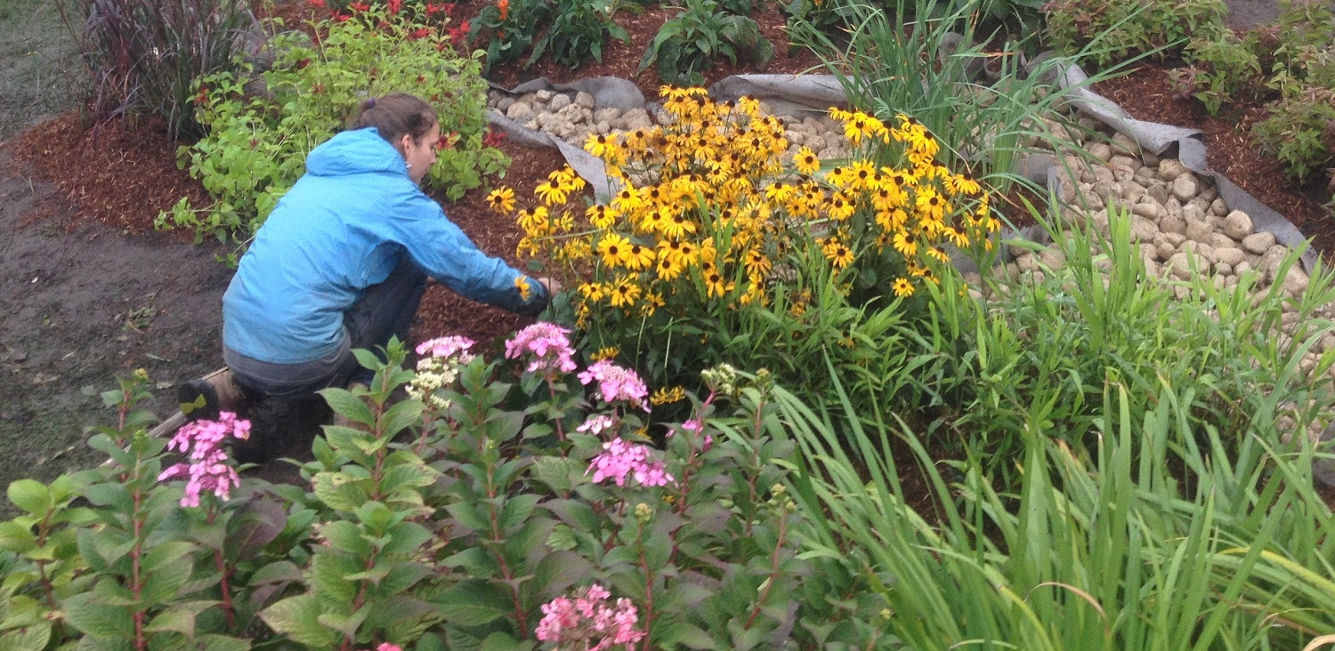 A Complete Guide To Building And Maintaining A Rain Garden Trca