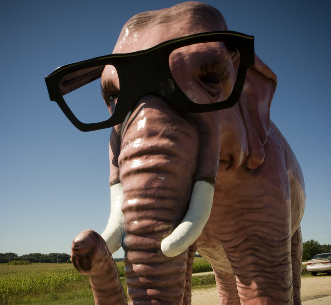 An elephant wearing glasses