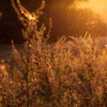 Wat is Mindfulness en hoe kan je het toepassen?