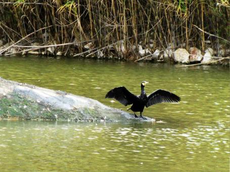 """Πάρκο Περιβαλλοντικής Ευαισθητοποίησης """"Αντώνης Τρίτσης"""""""