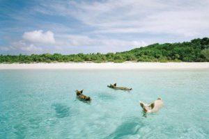 شاطئ الخنازير